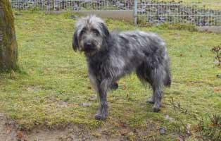 angsthund-strolch-wiese Angsthund