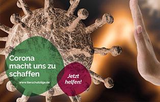 beitragsbild-corona-helfen Tierheim Unterheinsdorf