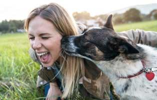 Hund frau und Alzenau