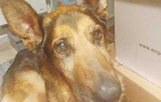 hund-bezar-gluecklich-vermittelt-gesicht Kleine Hündin aus dem Tierheim Békéscsaba sucht Futterpaten