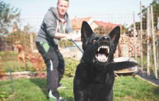 leinenagression-hund-leine-mann Katzenelend - Wir brauchen Hilfe