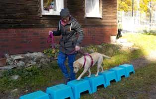 unsere-tierheime-breitenberg-training Aktuelles - Tierheim Breitenberg