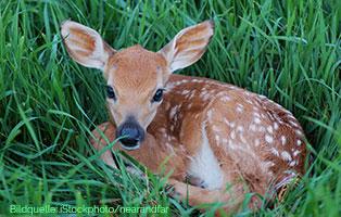 welt-der-wildtierbabys-rehkitz Unsere Tierheimtiere