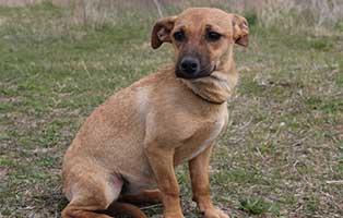 huendin-helga-bekescsaba-aufnahmepatenschaft Vier Hunde aus dem Tierheim Békéscsaba suchen Aufnahmepaten