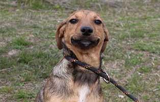 huendin-hilda-bekescsaba-aufnahmepatenschaft Vier Hunde aus dem Tierheim Békéscsaba suchen Aufnahmepaten