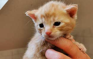 katzenbaby-maennlich-WK033-20-start-ins-leben Fünf Kitten aus dem Tierheim Wollaberg suchen Start-ins-Leben Paten