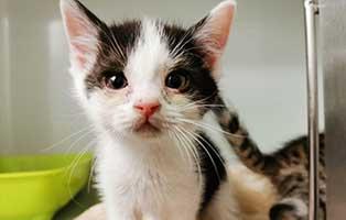 katzenbaby-maennlich-WK041-20-start-ins-leben Fünf Kitten aus dem Tierheim Wollaberg suchen Start-ins-Leben Paten