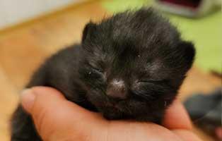 katzenbaby-maennlich-WK044-20-start-ins-leben Fünf Kitten aus dem Tierheim Wollaberg suchen Start-ins-Leben Paten