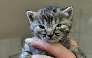 katzenbaby-weiblich-WK035-20-start-ins-leben Tierschutzligagruppe - denn Tierschutz geht uns alle an
