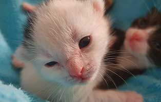 katzenbaby-HK093-20-weiblich-start-ins-leben-patenschaft Weitere vier Katzenbabys aus Thüringen suchen Start-ins-Leben Paten