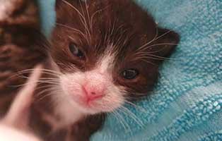 katzenbaby-HK094-20-maennlich-start-ins-leben-patenschaft Weitere vier Katzenbabys aus Thüringen suchen Start-ins-Leben Paten