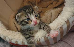 katzenbaby-HK096-20-maennlich-start-ins-leben-patenschaft Unsere Tierheimtiere