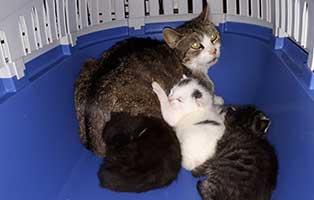 katzenmutter-HK081-20-aufnahmepatenschaft Tiervermittlung in unseren Tierheimen
