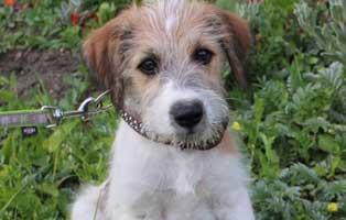 moxi-ungarn-aufnahmepatenschaft Messihaushalt – vierzehn kranke Katzen gerettet – Tierschutz-Alltag