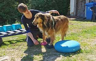 adam-laeuft-breitenberg-training-geraete Hund Adam läuft – für die Tierschutzliga