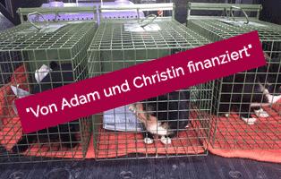 adam-laeuft-erledigt-dorf Hund Adam läuft – für die Tierschutzliga