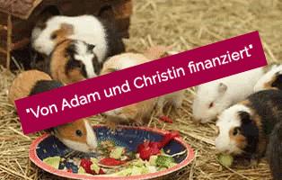 adam-laeuft-erledigt-unterheinsdorf Hund Adam läuft – für die Tierschutzliga