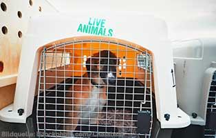 adam-laeuft-wollaberg-transportbox-hund Adam läuft ... Projekt Bückeburg - Hundetrakt