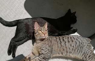 cesar-bagira-zuhause-gefunden-chillen Tierische Geschichten - Tierheim Wollaberg