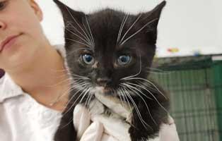 hoelzchen-hobel-thueringen-hobel Katzenbaby aus Thüringen braucht eine Bein OP