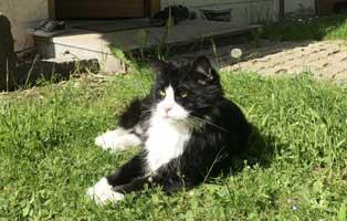 kater-brisco-zuhause-gefunden-wiese Tierische Geschichten - Tierheim Wollaberg