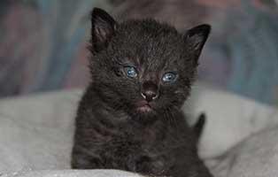 katzenbaby-BK-077-20-männlich-start-ins-leben Vier weitere Kitten aus dem Tierheim Bückeburg suchen Start-ins-Leben Paten