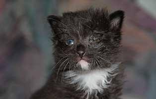 katzenbaby-BK-078-20-männlich-start-ins-leben Vier weitere Kitten aus dem Tierheim Bückeburg suchen Start-ins-Leben Paten