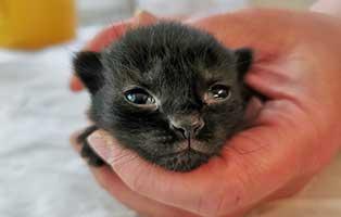 katzenbaby-SK220-20-weiblich-start-ins-leben Sechs Kitten aus dem Tierschutzliga-Dorf suchen Start-ins-Leben Paten