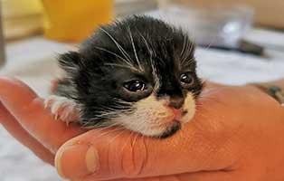 katzenbaby-SK222-20-maennlich-start-ins-leben Sechs Kitten aus dem Tierschutzliga-Dorf suchen Start-ins-Leben Paten