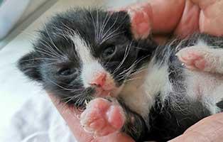 katzenbaby-SK223-20-maennlich-start-ins-leben Sechs Kitten aus dem Tierschutzliga-Dorf suchen Start-ins-Leben Paten
