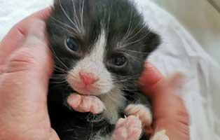 katzenbaby-SK224-20-maennlich-start-ins-leben Sechs Kitten aus dem Tierschutzliga-Dorf suchen Start-ins-Leben Paten