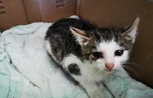 katzenbaby-bk63-20-maennlich-start-ins-leben Katzenbaby aus dem Tierheim Wollaberg sucht Start-ins-Leben Paten