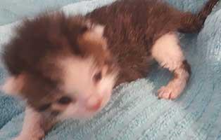 katzenbaby-maennlich-hk-106-20-start-ins-leben Drei Katzenbabys aus der Katzenstation Thüringen suchen Start-ins-Leben Paten