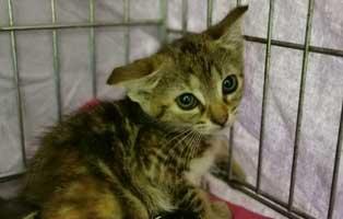 katzenbaby-sk277-20-weiblich-start-ins-leben 14 Kitten aus dem Tierschutzliga-Dorf suchen Start-ins-Leben Paten