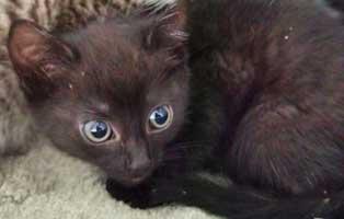 katzenbaby-sk278-20-weiblich-start-ins-leben 14 Kitten aus dem Tierschutzliga-Dorf suchen Start-ins-Leben Paten