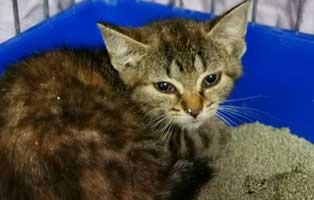 katzenbaby-sk279-20-weiblich-start-ins-leben 14 Kitten aus dem Tierschutzliga-Dorf suchen Start-ins-Leben Paten