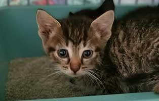 katzenbaby-sk280-20-weiblich-start-ins-leben Katzenbaby aus dem Tierheim Wollaberg sucht Start-ins-Leben Paten