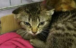 katzenbaby-sk281-20-maennlich-start-ins-leben 14 Kitten aus dem Tierschutzliga-Dorf suchen Start-ins-Leben Paten