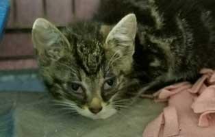 katzenbaby-sk282-20-maennlich-start-ins-leben 14 Kitten aus dem Tierschutzliga-Dorf suchen Start-ins-Leben Paten