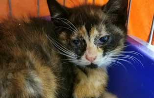 katzenbaby-sk283-20-weiblich-start-ins-leben 14 Kitten aus dem Tierschutzliga-Dorf suchen Start-ins-Leben Paten