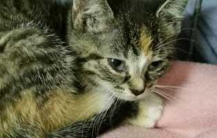 katzenbaby-sk284-20-weiblich-start-ins-leben 14 Kitten aus dem Tierschutzliga-Dorf suchen Start-ins-Leben Paten