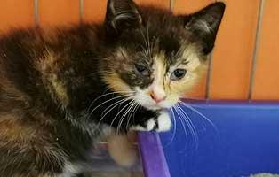 katzenbaby-sk285-20-weiblich-start-ins-leben 14 Kitten aus dem Tierschutzliga-Dorf suchen Start-ins-Leben Paten