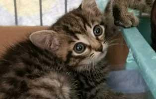 katzenbaby-sk287-20-weiblich-start-ins-leben 14 Kitten aus dem Tierschutzliga-Dorf suchen Start-ins-Leben Paten