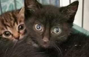 katzenbaby-sk304-20-maennlich-start-ins-leben 14 Kitten aus dem Tierschutzliga-Dorf suchen Start-ins-Leben Paten