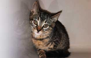 katzenbaby-uk-045-20-maennlich-start-ins-leben Katzenbaby aus dem Tierheim Wollaberg sucht Start-ins-Leben Paten