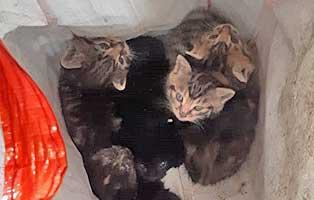 katzenbabys-garage-ausgegetzt-in-tuete Tiermessi - 23 Hunde verwahrlost - Beschlagnahmung