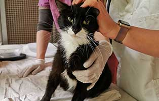 katzenmama-jule-kastrationspatenschaft Sechs Kitten aus dem Tierschutzliga-Dorf suchen Start-ins-Leben Paten
