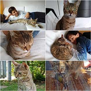 minouche-familie Katze Minouche ist zufrieden
