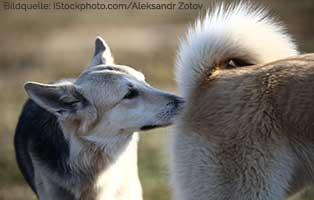 ratgeber-hunde-analdrüse Einen Hund in der Stadt halten