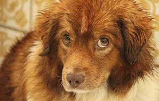 der-gestresste-hund-spaniel Aktuelles - Tierheim Breitenberg
